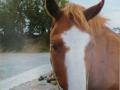 Фото лошади
